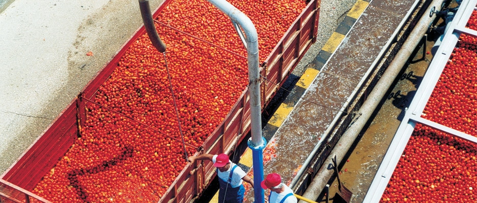 Facilitation of a Sustainable Agriculture Program for Processing Tomatoes